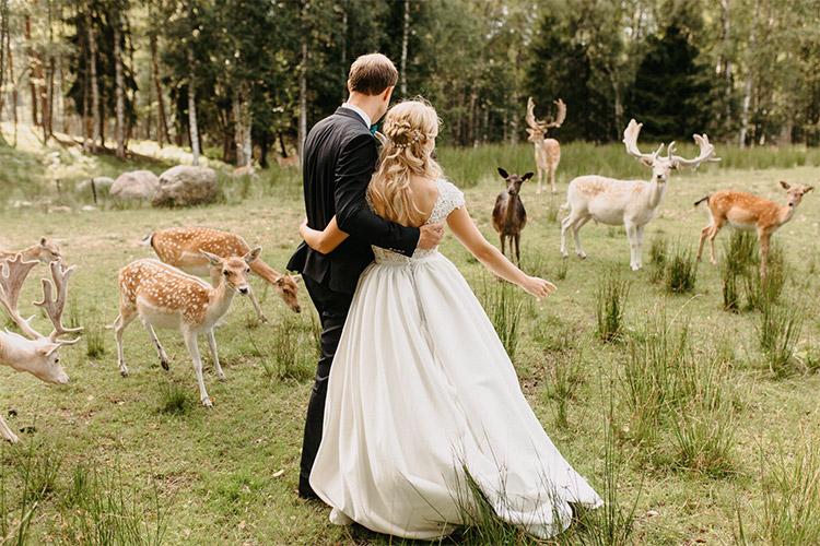 kāzu fotogrāfija ar meža dzīvniekiem